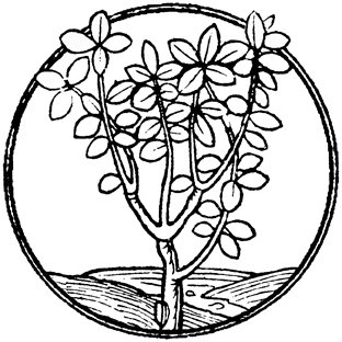 Logo_Nemeton